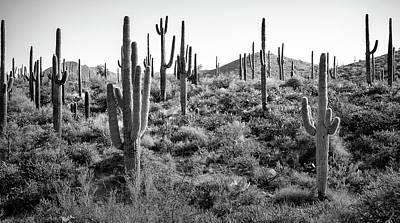 Arizona Saguaro Cactus Original