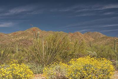 Photograph - Arizona-sonora Desert 6522-040719 by Tam Ryan