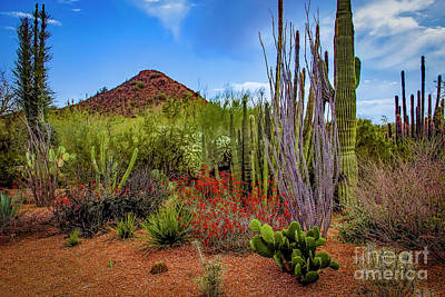 Photograph - Arizona Spring by Jon Burch Photography
