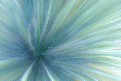 Photograph - Artistic Impression Of Desert Agave by Michael Orton
