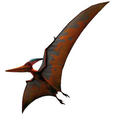 Artwork Of Pteranodon Sternbergi Art Print by Mark Garlick