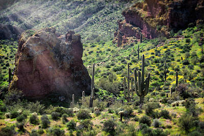 Photograph - As Dawn Wakes Up The Sonoran  by Saija Lehtonen