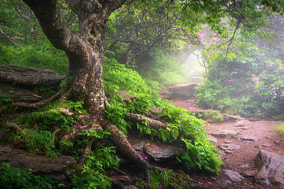 Landscapes Royalty-Free and Rights-Managed Images - Asheville North Carolina Appalachian Mountains Hiking Trail Scenic Landscape by Dave Allen