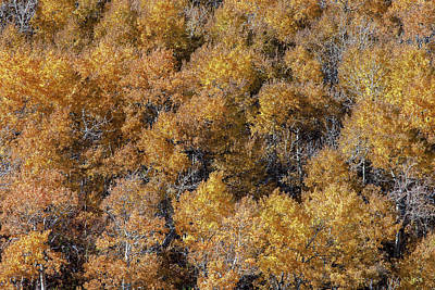 Photograph - Aspen Autumn Leaves by Todd Klassy