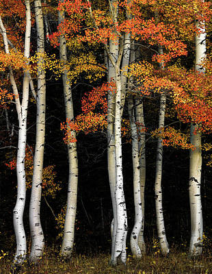 Photograph - Aspen Contrast by Leland D Howard