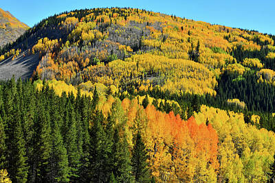 Photograph - Aspen Covered Hillsides En Route To Durango by Ray Mathis