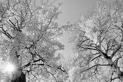 Photograph - Aspen Glow by Jim Garrison