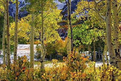Photograph - Aspen Glow by Leland D Howard