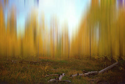 Photograph - Aspen Grove by Jeff Brunton