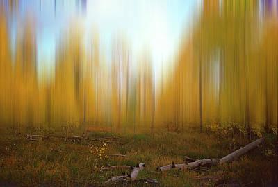 Photograph - Aspen Grove by Jeff Brunton