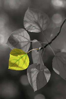 Photograph - Aspen Leaves Selective 2 by Jonathan Nguyen