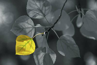 Photograph - Aspen Leaves Selective  by Jonathan Nguyen
