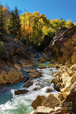 Sean - Aspen Mountain Stream by Norma Brandsberg