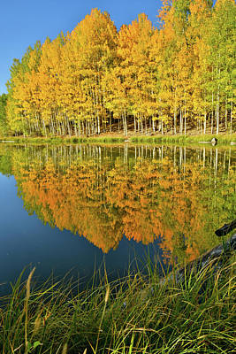 Photograph - Aspen Reflection Along Highway 145 by Ray Mathis