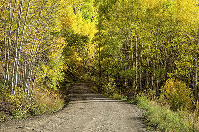 Photograph - Aspen Tunnel by Denise Bush
