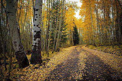 Photograph - Aspen Way by Richard Raul Photography