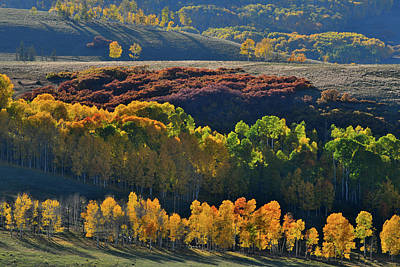 Photograph - Aspens Aglow On Wilson Mesa by Ray Mathis