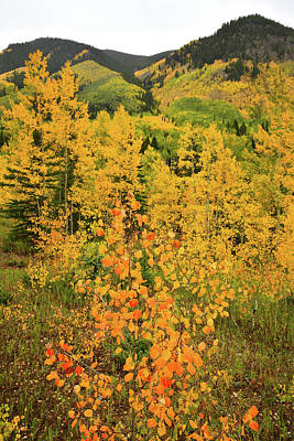 Photograph - Aspens Along Castle Creek Road by Ray Mathis