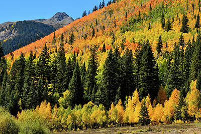 Photograph - Aspens Galore Near Silverton Co by Ray Mathis