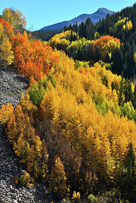 Photograph - Aspens In Full Bloom On Highway 550 by Ray Mathis