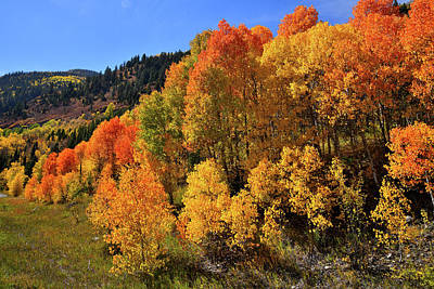 Photograph - Aspens In Full Color On The Ascent To Mcclure Pass by Ray Mathis