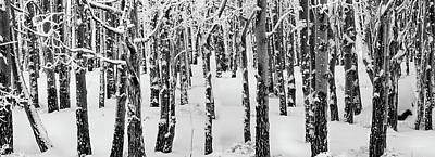 Photograph - Aspens In Winter by Leland D Howard