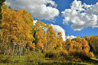 Photograph - Aspens Nears Woods Lake On Wilson Mesa by Ray Mathis