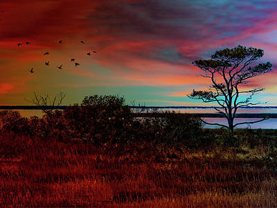 Photograph - Assateague Island by Paul Wear