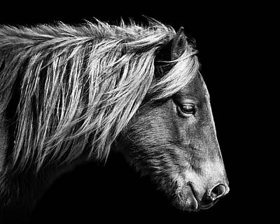 Photograph - Assateague Pony Sarah's Sweet Tea B And W by Bill Swartwout Fine Art Photography