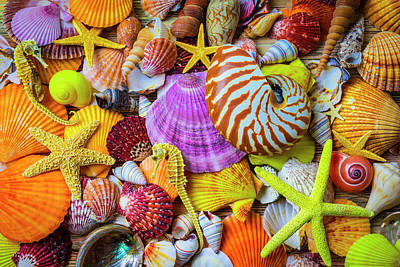 Photograph - Assortment Of Beautiful Seashells by Garry Gay