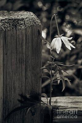 Photograph - Asunder by Susan Warren