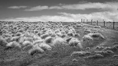 Abstract Trees Mandy Budan - At Slope Point New Zealand BW by Joan Carroll
