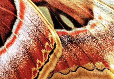 Photograph - Atlas Moth Wing Details by John Rizzuto
