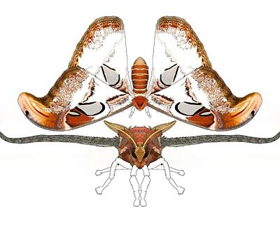 Master Wall Art - Digital Art - Atlas Moth2 by Joan Stratton
