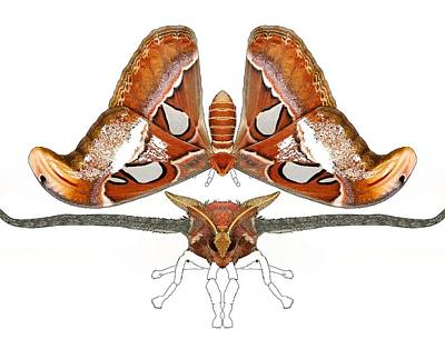 Master Wall Art - Digital Art - Atlas Moth4 by Joan Stratton