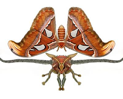 Master Wall Art - Digital Art - Atlas Moth7 by Joan Stratton
