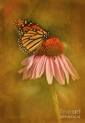 Photograph - Attracted Monarch by Scott Kemper