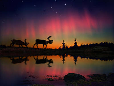 Photograph - Aurora Borealis And Reindeers Under by Per-andre Hoffmann / Look-foto