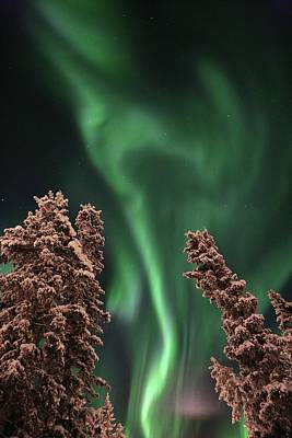 Photograph - Aurora Borealis Northern Lights Above by Robert Postma
