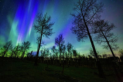 Photograph - Aurora over Trees by Dixon Pictures