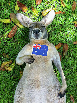 Australian Kangaroo Art Print by Mb Photography