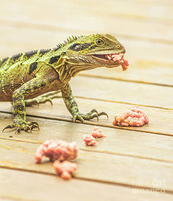 A White Christmas Cityscape - Australian water dragon by Jorgo Photography - Wall Art Gallery