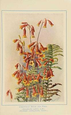 Impressionist Landscapes - Australian wild flowers 4 by Celestial Images
