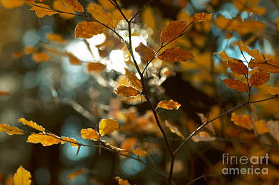 Photograph - Autumn 13 by Ines Schoenherr - Photographies and  More