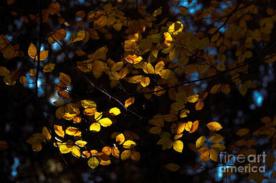 Photograph - Autumn 14 by Ines Schoenherr - Photographies and  More