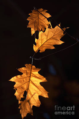Photograph - Autumn 17 by Ines Schoenherr - Photographies and  More