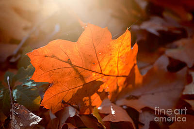 Photograph - Autumn 2 by Ines Schoenherr - Photographies and  More