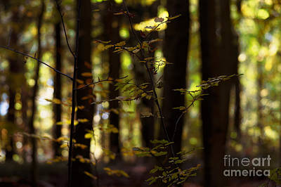 Photograph - Autumn 23 by Ines Schoenherr - Photographies and  More