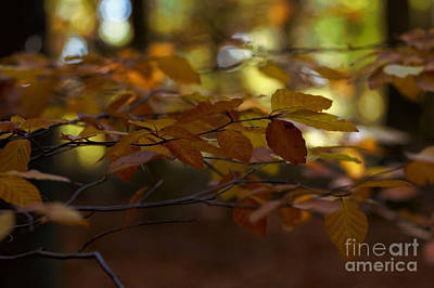 Photograph - Autumn 24 by Ines Schoenherr - Photographies and  More