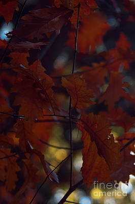 Photograph - Autumn 25 by Ines Schoenherr - Photographies and  More